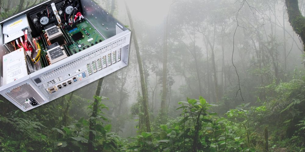 Trenton Systems 4U server in rainforest